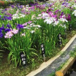【続】堀切菖蒲園で美味しいのに安い!1500べろ酒場まとめ6選