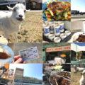 名古屋「名古屋競馬場」名古屋グルメで昼飲み!ヤギのいる歴史ある競馬場